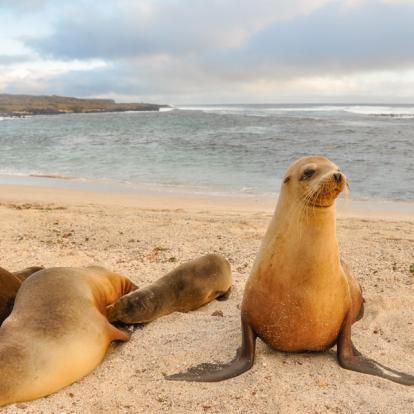 Voyage en Equateur - Les Galápagos