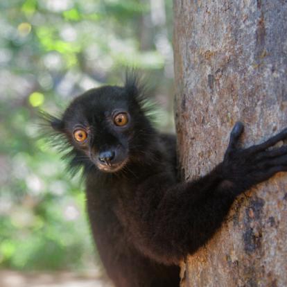 Voyage à Madagascar - Les Trésors cachés de Madagascar