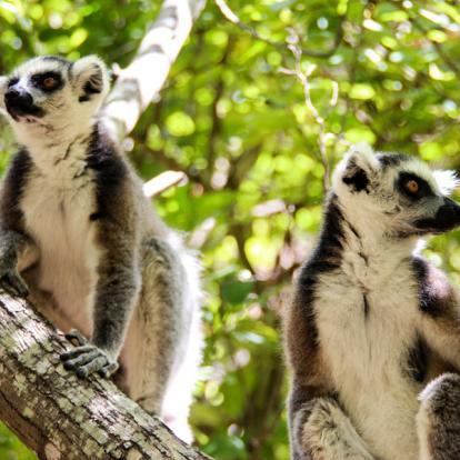 Circuit à Madagascar - Au cœur de la Nature Malgache