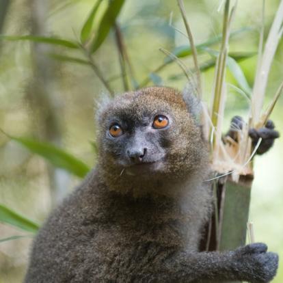 Voyage à Madagascar - A l'ombre des Baobabs