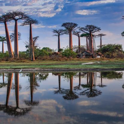 Circuit à Madagascar - A l'ombre des Baobabs