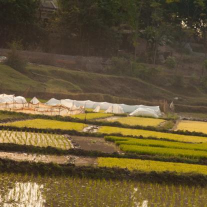 Voyage au Vietnam - Entre Terre et Mer