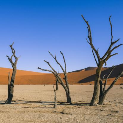 Voyage de Noce en Namibie
