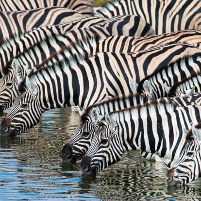 Voyage en Namibie - D'Etosha Au Fish River Canyon