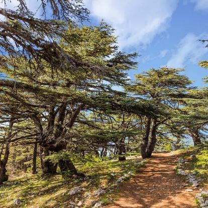 Circuit au Liban - Sur les vieux sentiers