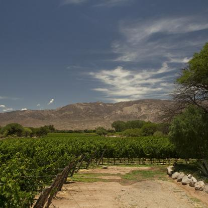 Circuit en Argentine - Culture Andine et Vignobles d'altitude